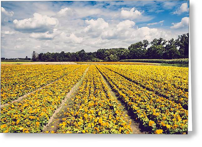 Clouds Scape Greeting Cards - Yellow Flower Farm Greeting Card by Wim Lanclus