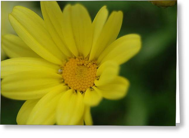 Belle Isle Greeting Cards - Yellow Flower Greeting Card by Gary Marx
