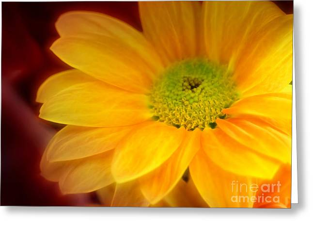 Flower Artwork Greeting Cards - Yellow Flowerglow Greeting Card by Lutz Baar