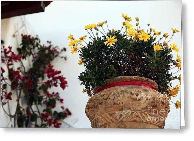 Yellow Flower Pot Greeting Cards - Yellow Flowers in Mykonos Greeting Card by John Rizzuto