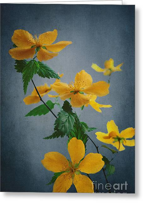 Texture Floral Pyrography Greeting Cards - Yellow Flowers Greeting Card by Jelena Jovanovic