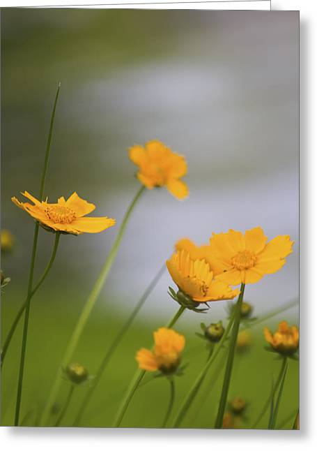 Indiana Flowers Greeting Cards - Yellow Flowers Greeting Card by Michael Huddleston