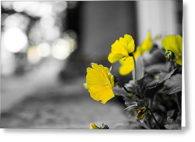 Yellow Flowers Greeting Card by Nathan Hillis
