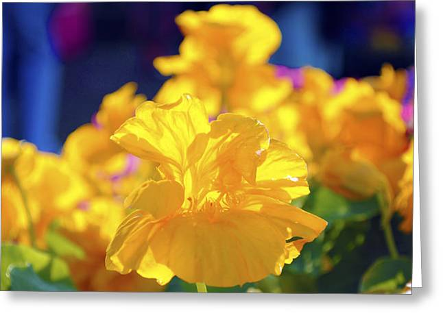 Flora Greeting Cards - Yellow flowers Greeting Card by Sumit Mehndiratta