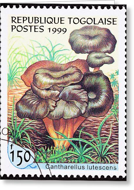 Postage Stamp Greeting Cards - Yellow Foot Mushroom Canthare lutescens Greeting Card by Jim Pruitt