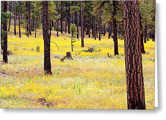 Yellow Forest Greeting Card by Kume Bryant