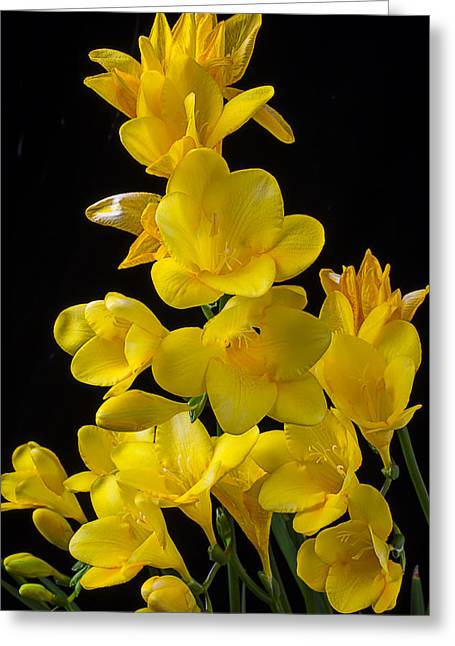 Seasonal Bloom Greeting Cards - Yellow Freesia Greeting Card by Garry Gay