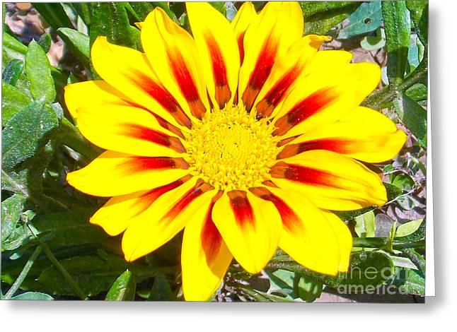 Elvira Ladocki Greeting Cards - Yellow Garden Gerber Greeting Card by Elvira Ladocki