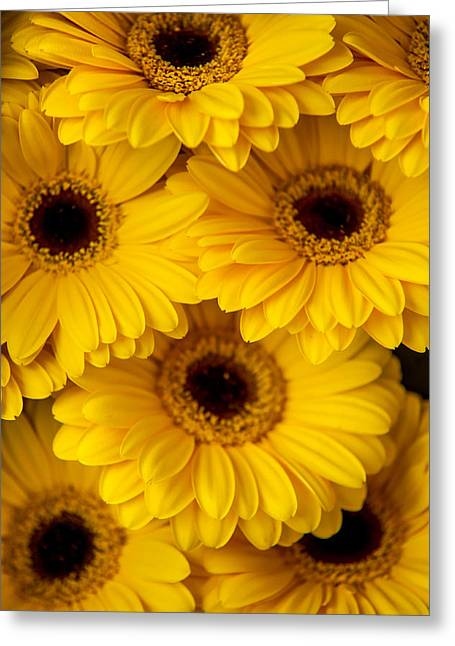 Square Format Greeting Cards - Yellow Gerbera 1. Amsterdam Flower Market Greeting Card by Jenny Rainbow