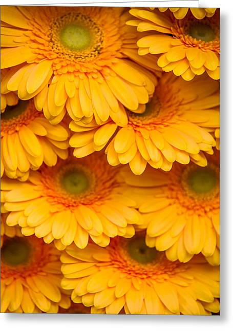 Square Format Greeting Cards - Yellow Gerbera 2. Amsterdam Flower Market Greeting Card by Jenny Rainbow