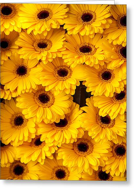 Square Format Greeting Cards - Yellow Gerbera. Amsterdam Flower Market Greeting Card by Jenny Rainbow
