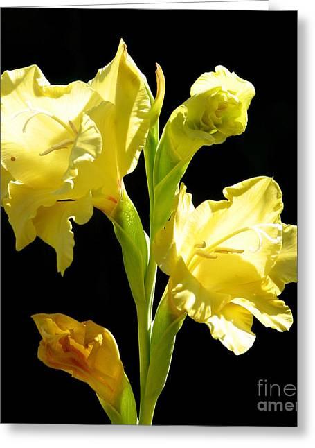 Print Greeting Cards - Yellow Gladioli Flowers 2 Greeting Card by Rose Santuci-Sofranko