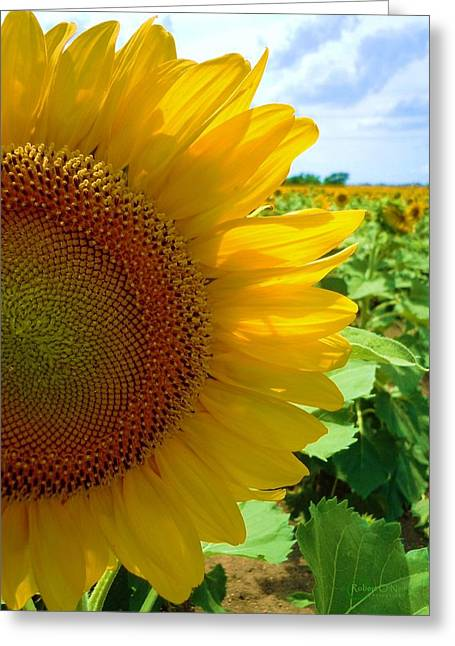 Yellow Glory #2 Greeting Card by Robert ONeil