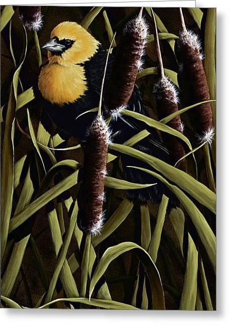 Yellow Headed Blackbird And Cattails Greeting Card by Rick Bainbridge