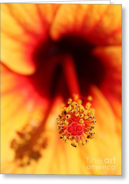 Eve Wheeler Greeting Cards - Yellow Hibiscus V-1 Greeting Card by Eve Wheeler