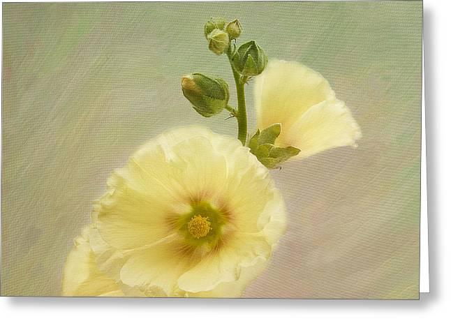 Alcea Rosea Greeting Cards - Yellow Hollyhock 2 Greeting Card by Robert Murray