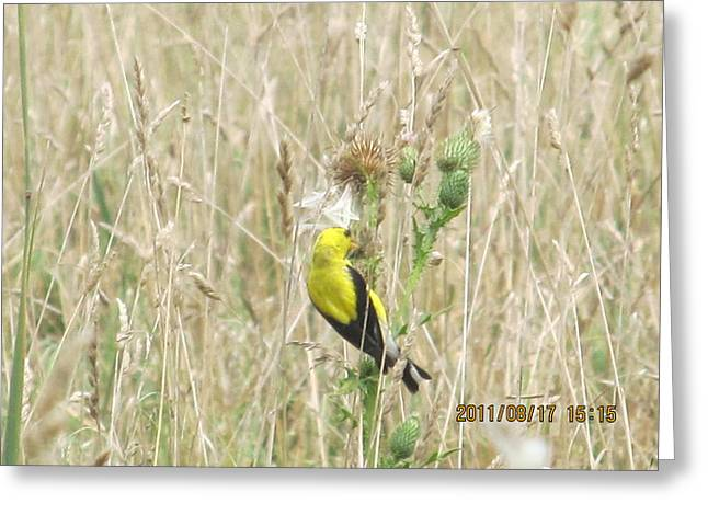 Yellow In The Meadow Greeting Card by Tina M Wenger