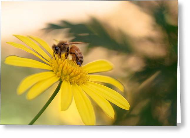 Honey Bee Greeting Cards - Yellow is such a summery colour Greeting Card by Constance Fein Harding