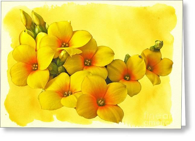 Mother Nature Greeting Cards - Yellow Kalanchoe - Succulent Sunshine Greeting Card by Mother Nature