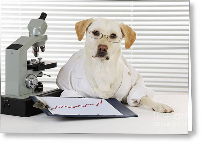 Recently Sold -  - Working Dog Greeting Cards - Yellow Lab In Lab Coat Greeting Card by John Daniels