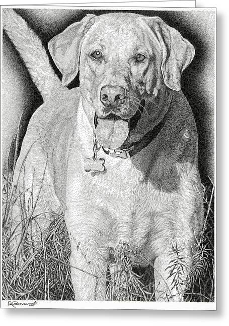 Yellow Dog Drawings Greeting Cards - Yellow Lab in the Field Greeting Card by Rob Christensen