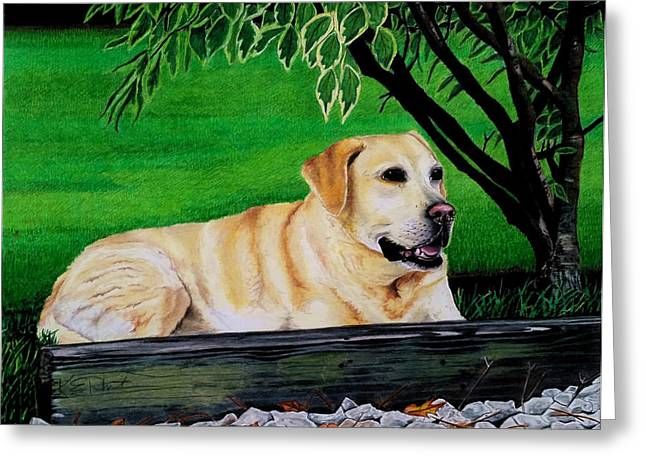 Yellow Dog Drawings Greeting Cards - Yellow Lab Greeting Card by Karen Rhodes