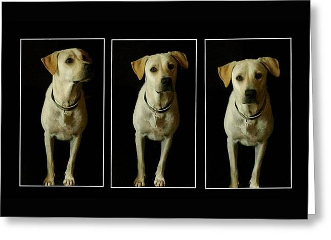 Puppies Photographs Greeting Cards - Yellow Lab Love Greeting Card by Marisela Mungia