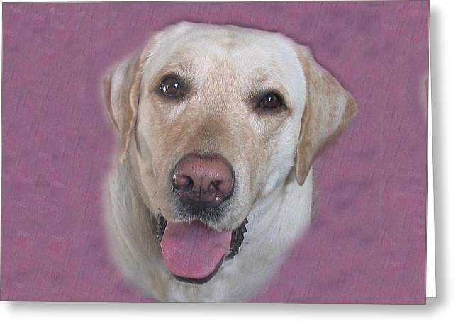 Pat Mchale Greeting Cards - Yellow Lab Greeting Card by Pat Mchale