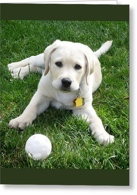 Doggie Photographs Greeting Cards - Yellow Lab Puppy Got A Ball Greeting Card by Irina Sztukowski