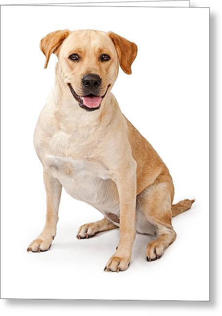 Companion Dog Greeting Cards - Yellow Lab Sitting Down  Greeting Card by Susan  Schmitz