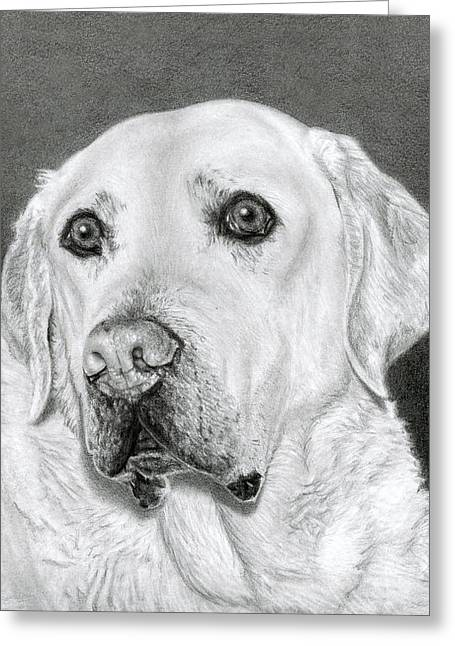 Yellow Labrador Retriever- Bentley Greeting Card by Sarah Batalka
