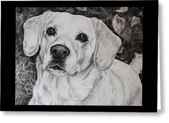Retriever Prints Drawings Greeting Cards - Yellow Labrador Retriever Greeting Card by Cassandra Gallant