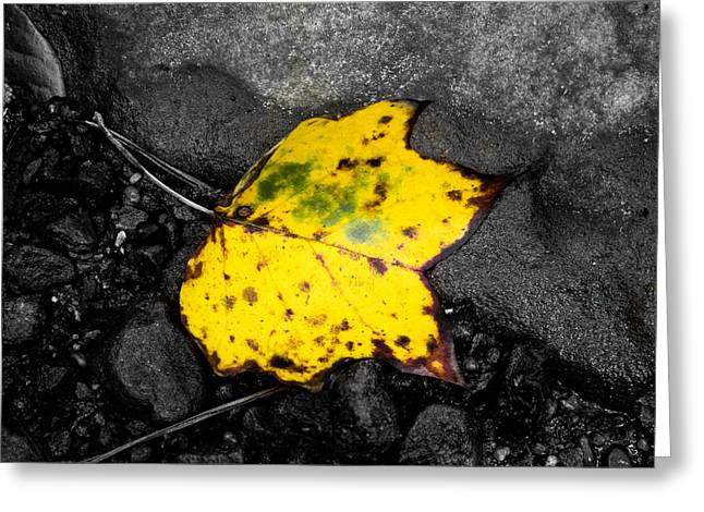 Black Rock Yellow Leaves Water Greeting Cards - Yellow Leaf Greeting Card by Shelby  Young
