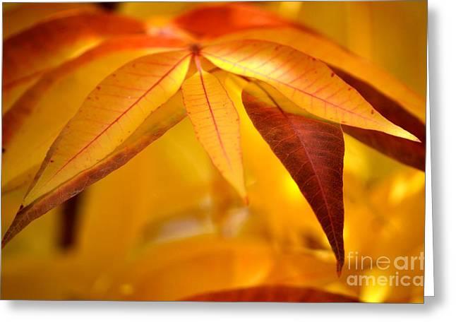 Yellow Leaves At Dawn Greeting Card by Deb Halloran
