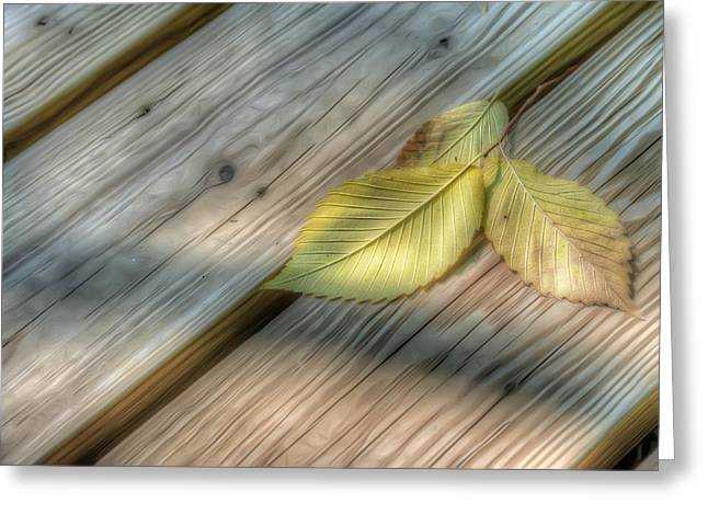 Three Leaves Greeting Cards - Yellow Leaves on Wood Greeting Card by Scott Norris