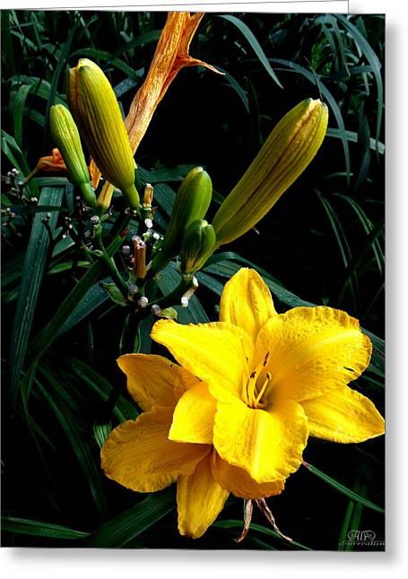 Lilli Greeting Cards - Yellow Lilli Greeting Card by Alenia Laguardia