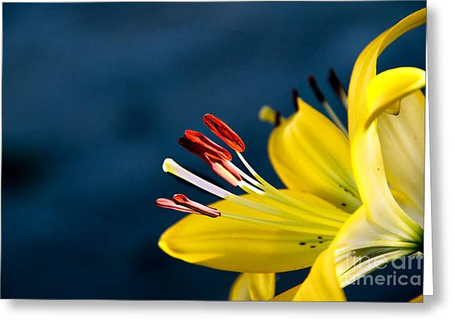 Day Lilly Greeting Cards - Yellow Lily Stamens Greeting Card by Robert Bales