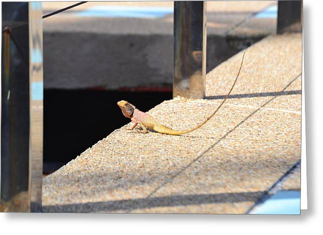 Larned Greeting Cards - Yellow Lizard Greeting Card by Aaron Littler
