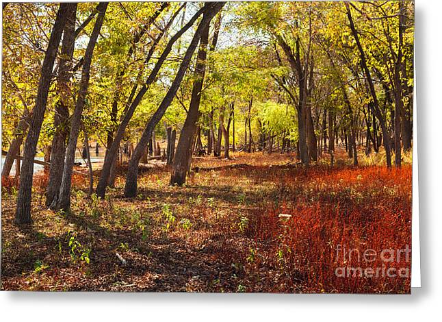 Oklahoma Landscape Greeting Cards - Yellow Morning Greeting Card by Iris Greenwell
