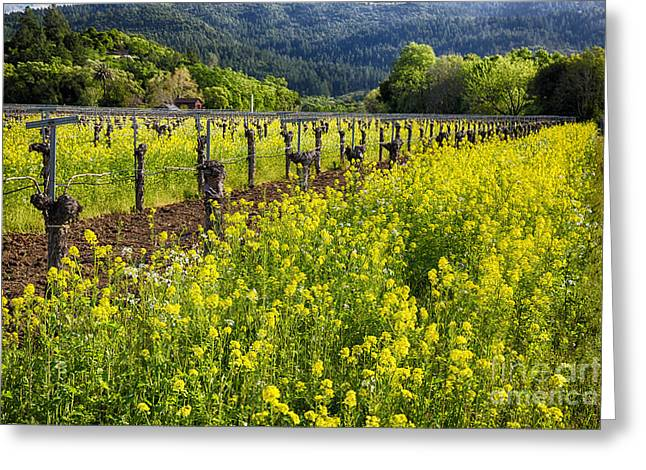 California Agriculture Greeting Cards - Yellow Mustard and Old Grapevines Greeting Card by George Oze