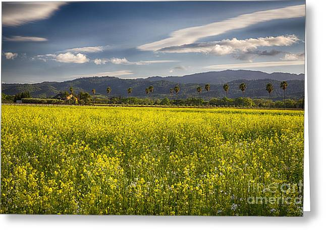Grape Vineyard Greeting Cards - Yellow Mustard and Palm Trees in Napa Valley Greeting Card by George Oze