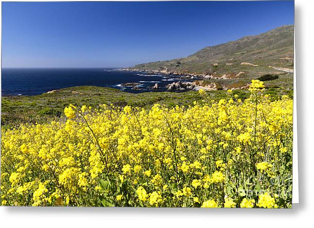 Big Sur California Greeting Cards - Yellow Mustard Blooming at the Coast Greeting Card by George Oze