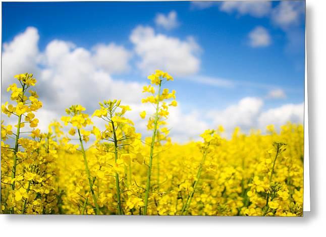 Newsom Greeting Cards - Yellow Mustard Field Greeting Card by Nila Newsom
