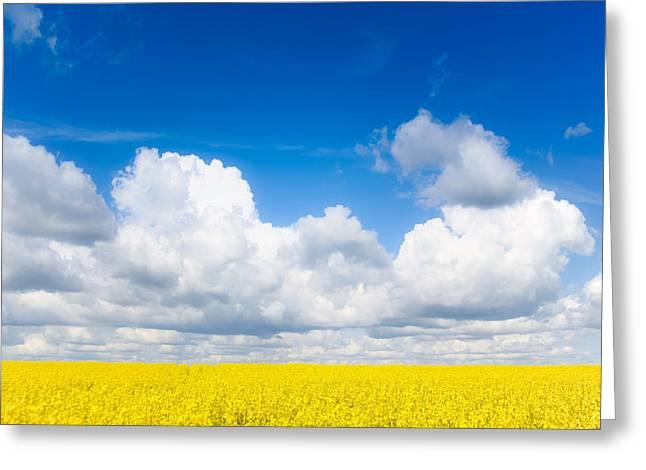 Mustard Greeting Cards - Yellow Mustard Fields Under a Deep Blue Sky Greeting Card by Nila Newsom
