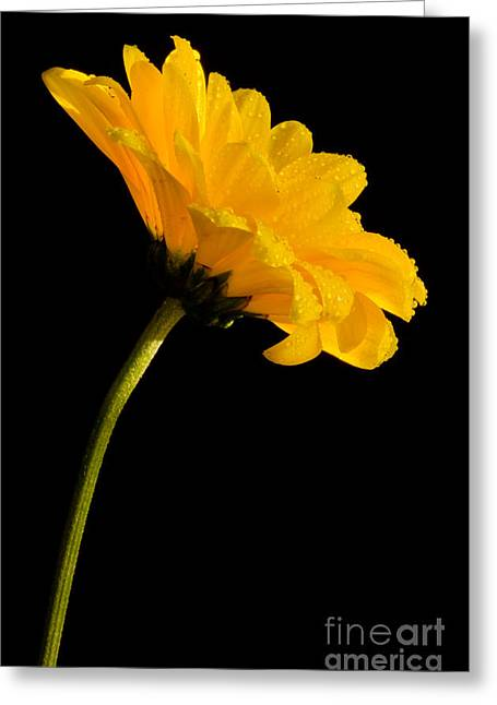 Bloosom Greeting Cards - Yellow On Black Greeting Card by Nick  Boren