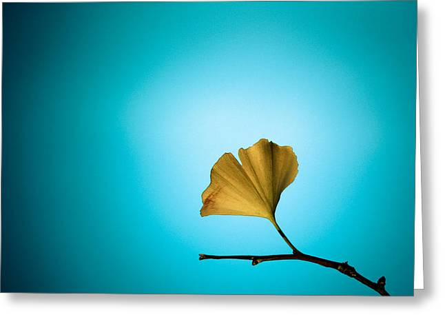 Yellow On Blue Greeting Card by Carrie Cole