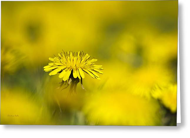 Colorful Dandelions Greeting Cards - Yellow on Yellow Dandelion Greeting Card by Christina Rollo