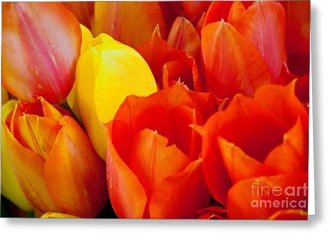 Orange Greeting Cards - Yellow One Greeting Card by Dana Kern