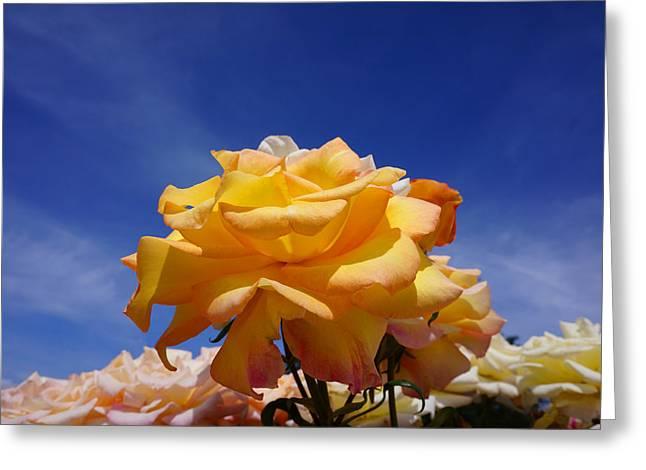 Yellow Orange Rose Flower Art Prints Blue Sky Greeting Card by Baslee Troutman