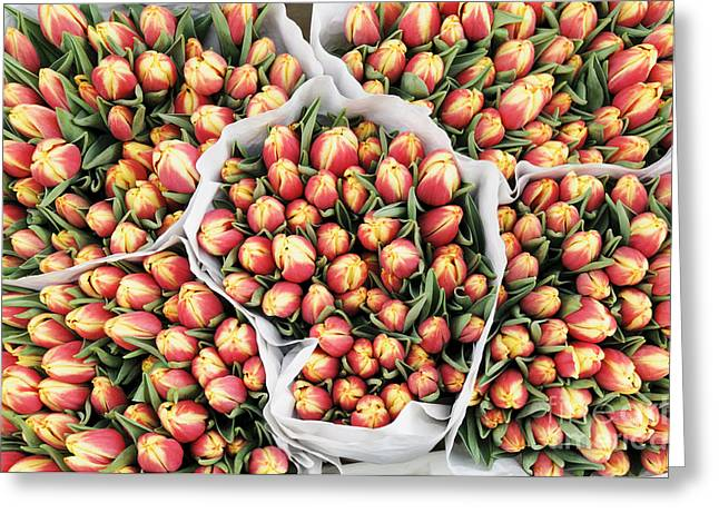 Tulips Greeting Cards - Yellow Orange Tulip Bouquets Greeting Card by Oscar Gutierrez